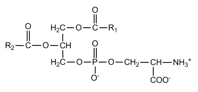 Fosfatidilserina un utile trattamento per la memoria, alzheimer e declino cognitivo